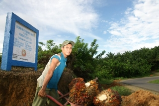 Kebun Kas Desa – Oil Palm Project for Villagers